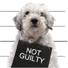 7-not-guilty1